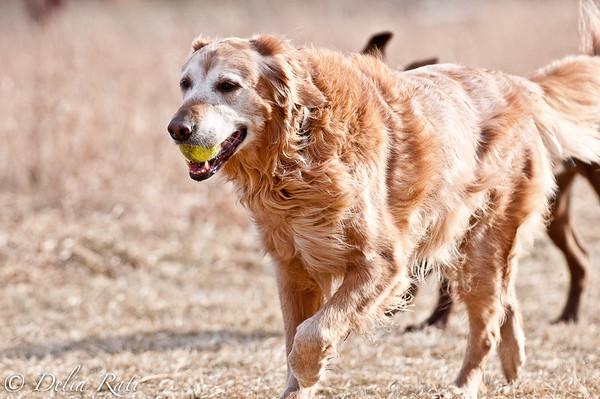 dog_park-35