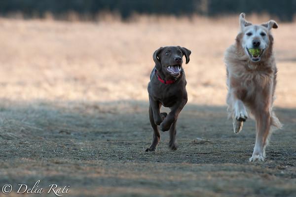 dog_park-13