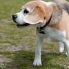 dog_park-60