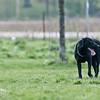 dog_park-95