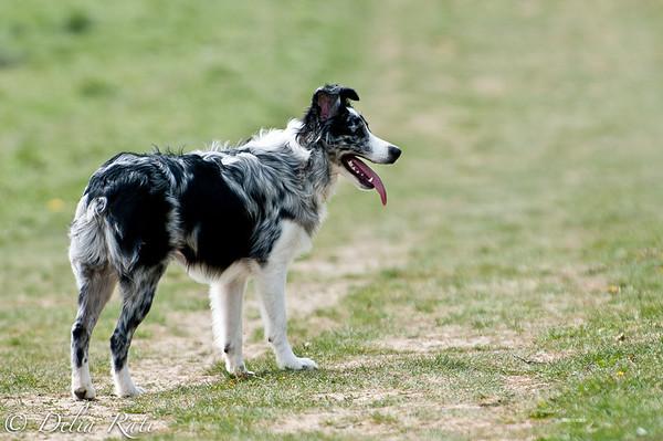dog_park-71