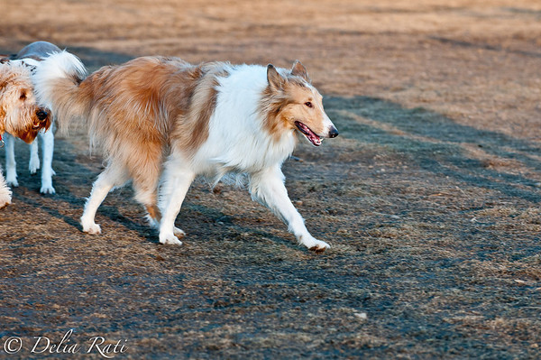 dog_park-29
