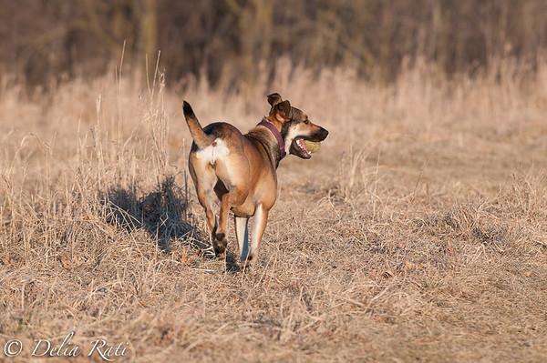 dog_park-17
