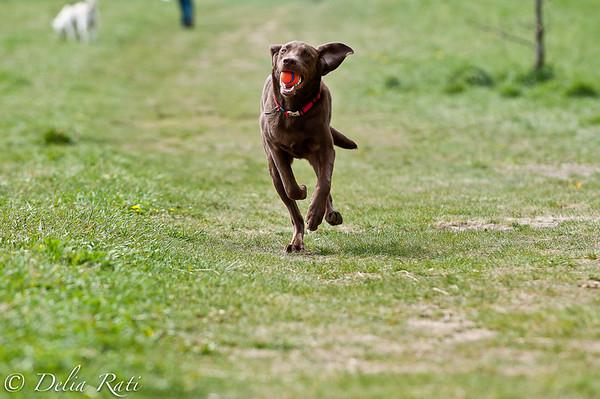 dog_park-56