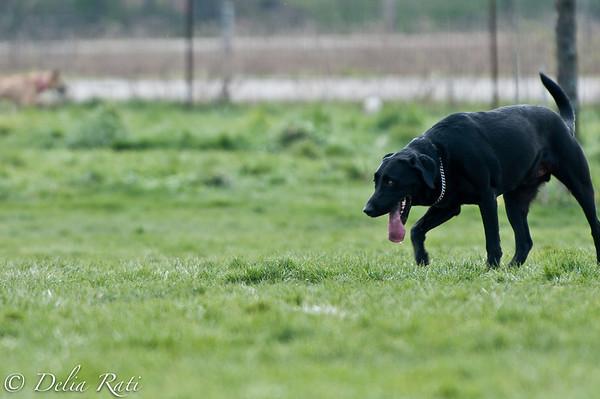 dog_park-96