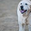 dog_park-8