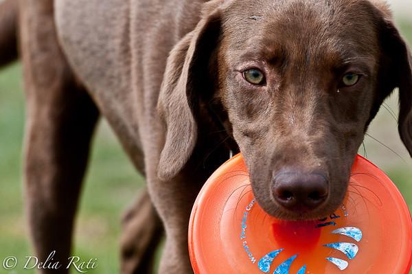 dog_park-97