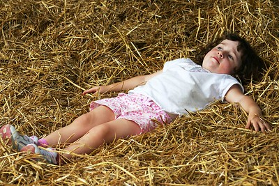 Rosie in the hay at Saunder's farm