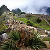 Machu Picchu - Grace Munday
