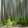Pemberton _DSC7355  photoshop