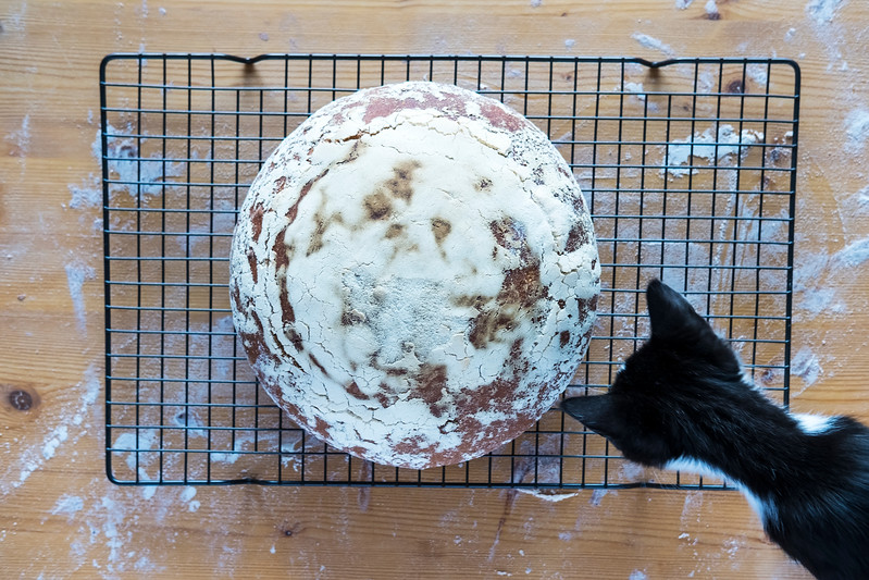Cat Sourdough