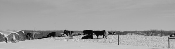 Farmington, MN. Dairy Farm  ©JLCramerPhotography 2009