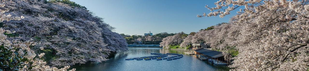 Chidorigafuchi Morning Panorama