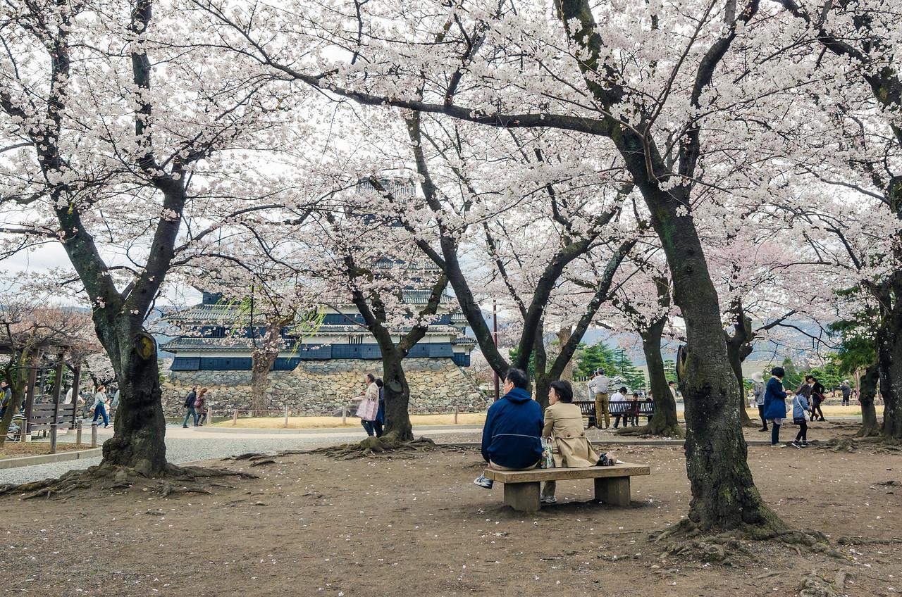 Relaxing Beneath Matsumoto Sakura