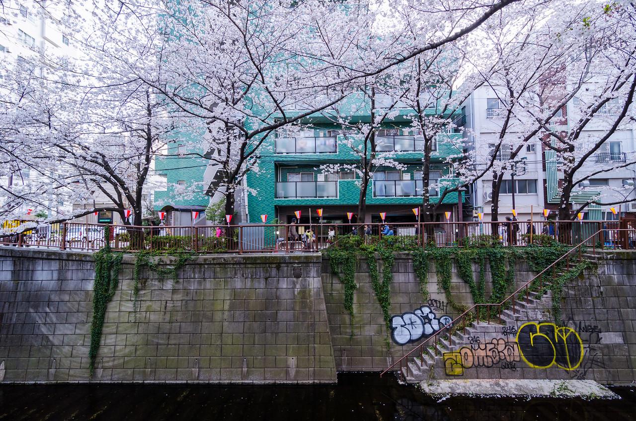 Sakura and Graffiti