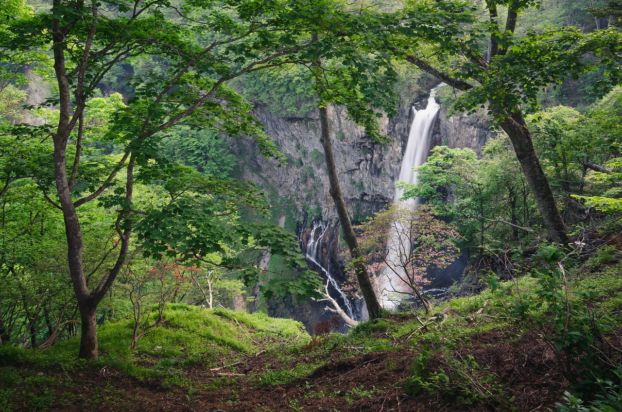 The Waterfall In The Woods