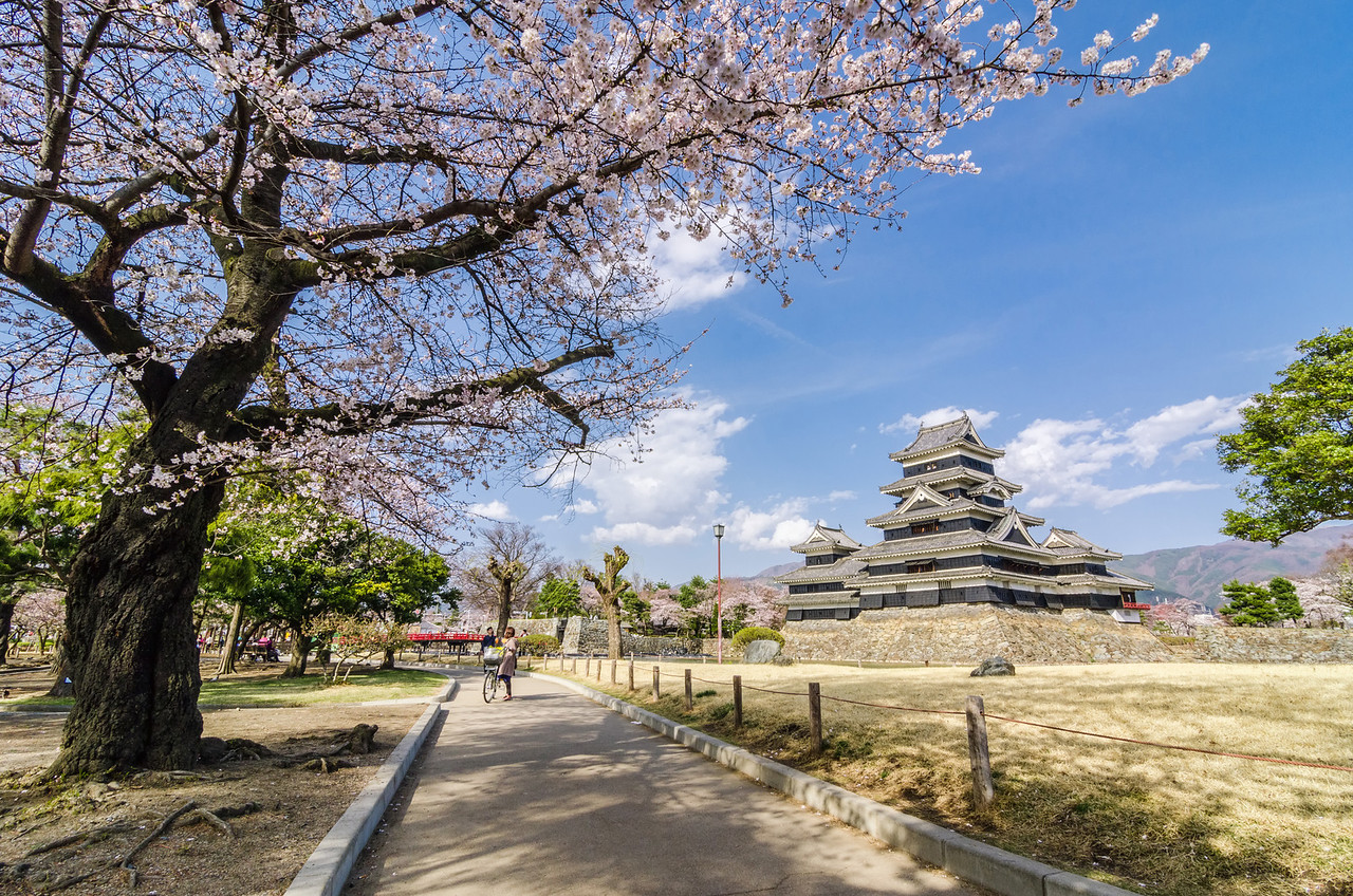 In The Shade of the Sakura