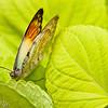 more_butterflies (19 of 66)