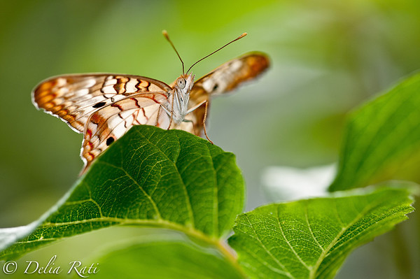 more_butterflies (46 of 66)