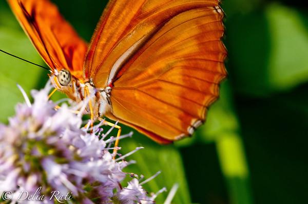 more_butterflies (56 of 66)