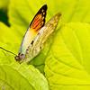 more_butterflies (18 of 66)