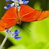 more_butterflies (29 of 66)
