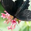 more_butterflies (27 of 66)
