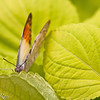 more_butterflies (17 of 66)