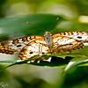 more_butterflies (49 of 66)