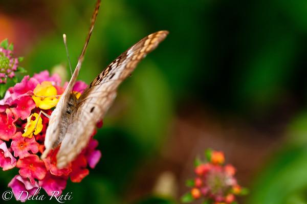 more_butterflies (44 of 66)