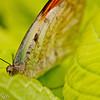 more_butterflies (15 of 66)