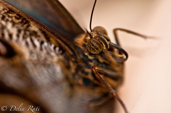 more_butterflies (5 of 66)