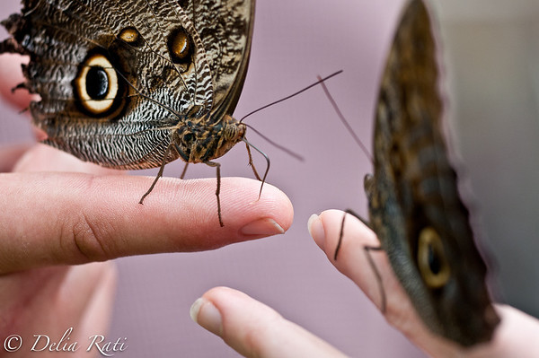 more_butterflies (31 of 66)
