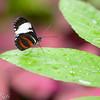 more_butterflies (4 of 66)