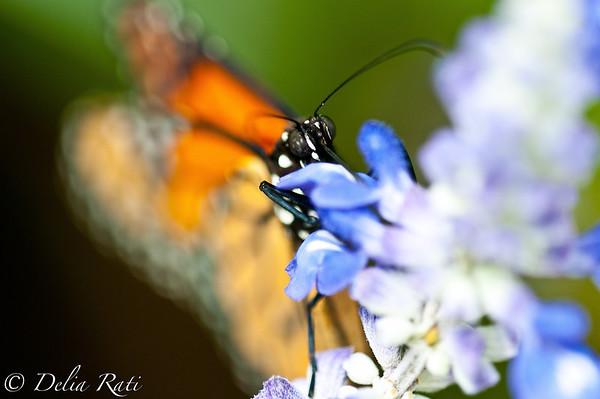 more_butterflies (21 of 66)