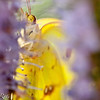 more_butterflies (59 of 66)