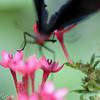 more_butterflies (23 of 66)