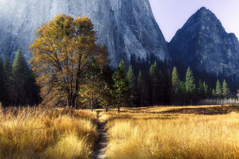 Fall colors in Yosemite National Park