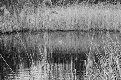London Wetland Centre Barnes, London