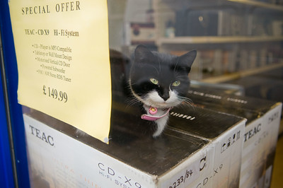 Cat in a shop, Bethnal Green