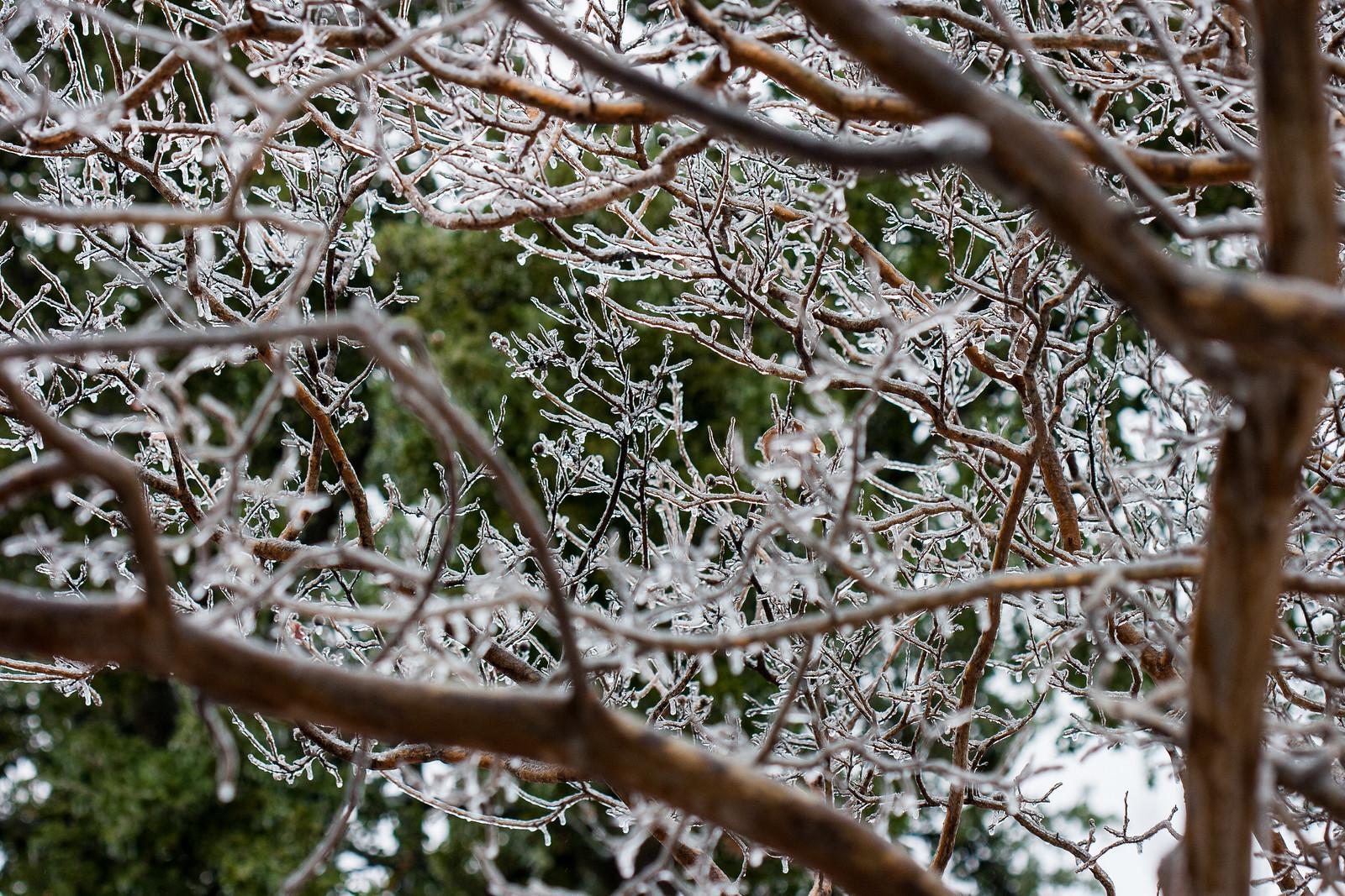 Winter-2996