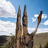 Waving Klansman trees