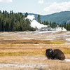 Quintessential Yellowstone