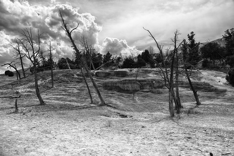 Terraces area of Mammoth Hot Springs
