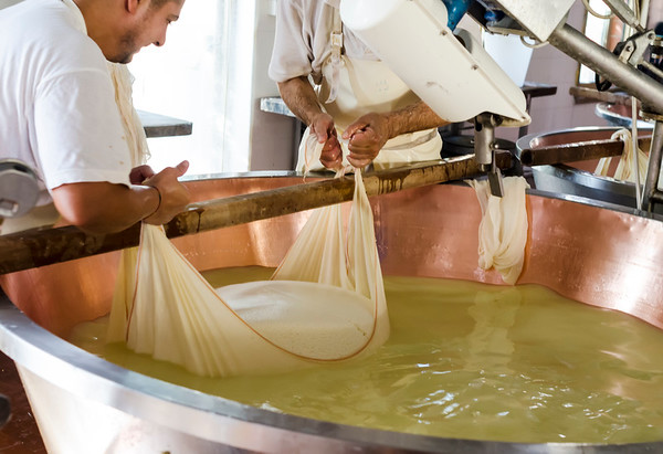 Parmigiano Reggiano in the making: two to be