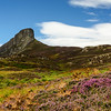 Heather by the An Sgurr, Eigg