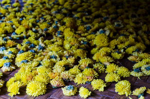 Chrysanthemum flowers