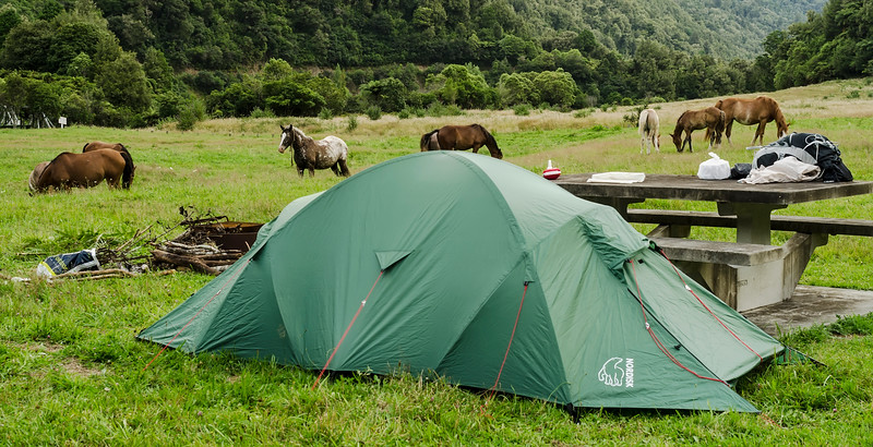 Camping with Horses