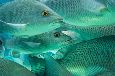 Carribean2014-4051