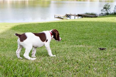 Val - 12 weeks old